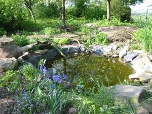 mise en place bassin de jardin