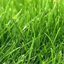 Comment bien tondre son gazon terre et jardin terre et for Tondre le gazon
