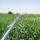Quelle irrigation pour votre serre ?