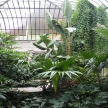Les protections hivernales de jardin