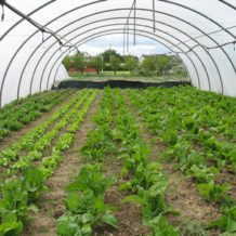 Mon jardin couvert par une serre de jardin terre et jardin for Jardin couvert lyon