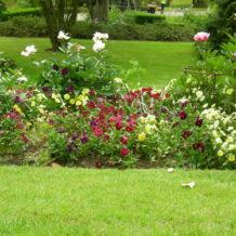 Conseil jardin du jour n°1