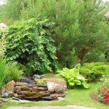 Conseils pour les jardiniers du Dimanche !!