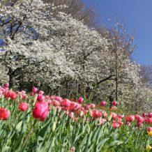 Comment préparer ses arbres pour l'arrivée du printemps ?