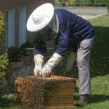 Trois choses à savoir avant d'installer une ruche dans son jardin