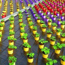 Coronovirus : la filière horticole en danger