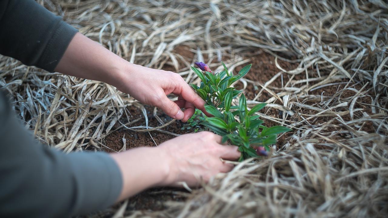 jardinage-plantation-potager