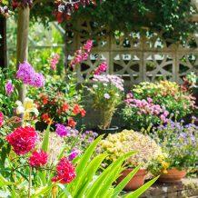 Quelles fleurs planter pour avoir un beau jardin ?