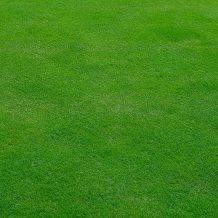 10 règles d'or pour un gazon plus vert qu'un terrain de golf