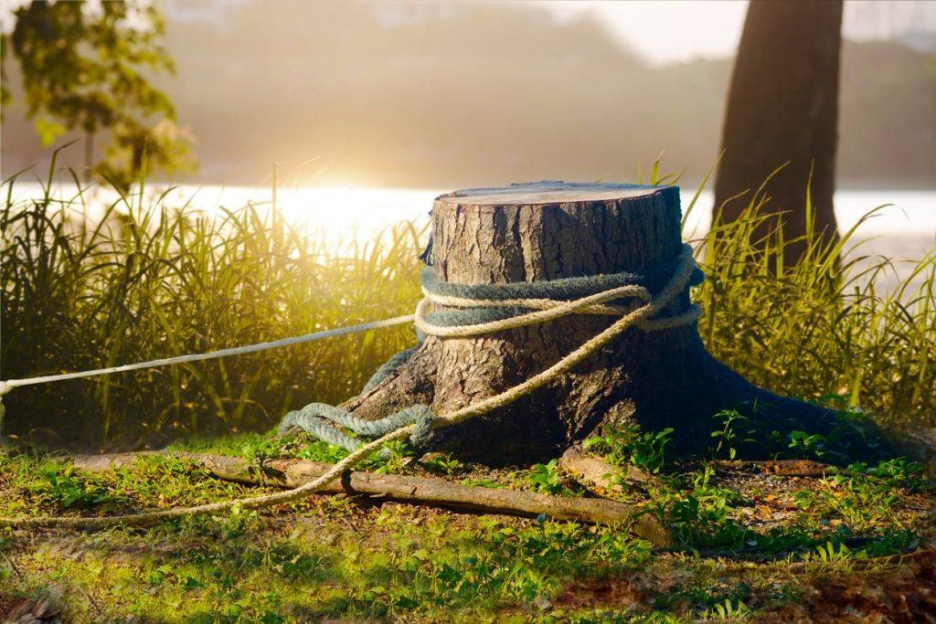 retirer souche arbre
